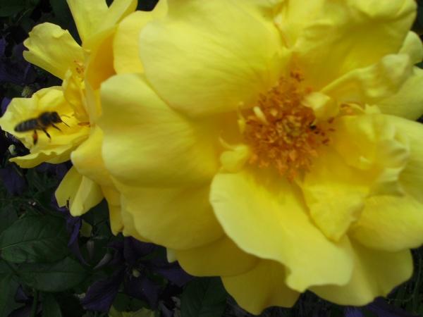 33 - La couleur jaune !!! Golden10