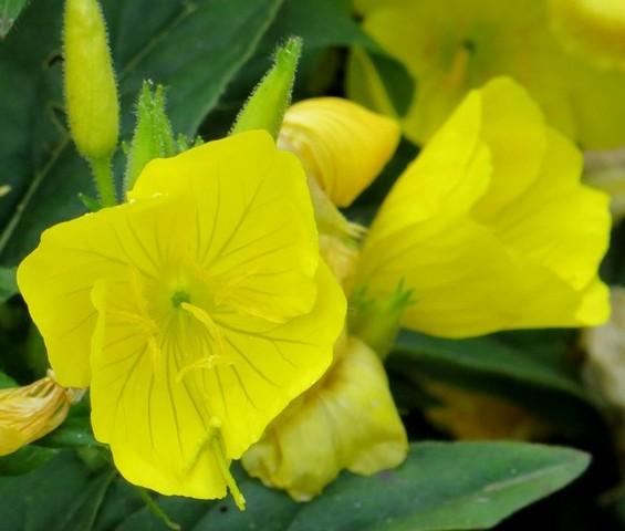 33 - La couleur jaune !!! Img_0312