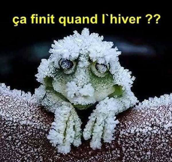 humour - Page 37 15895011