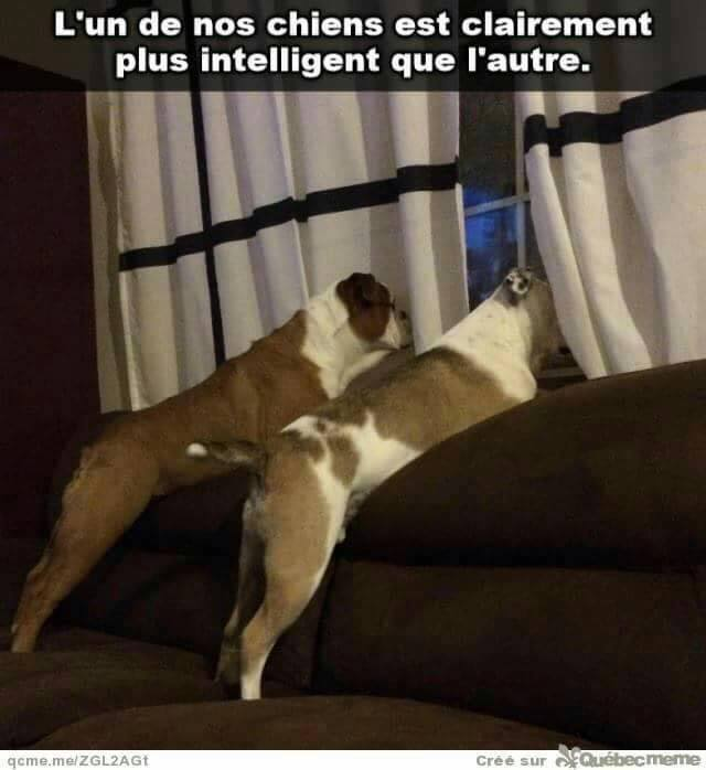 humour - Page 38 15966011