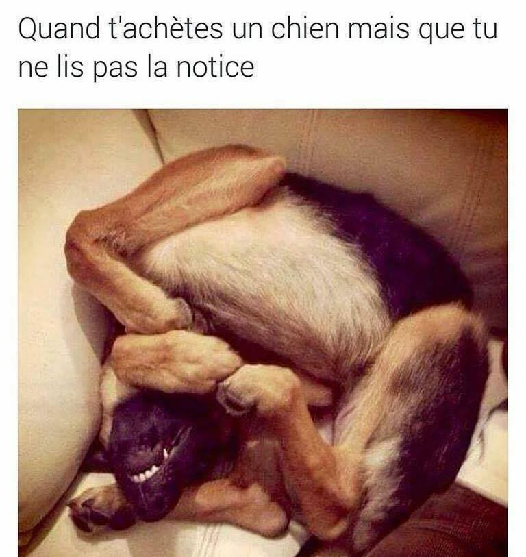 humour - Page 2 16142910