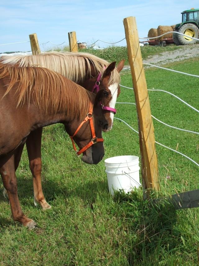 Mes chevaux!! Fin_ao11