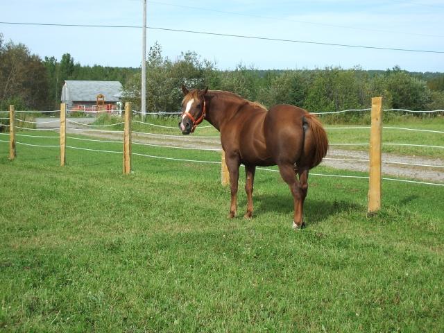 Mes chevaux!! Fin_ao13
