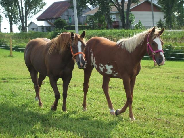 Mes chevaux!! Fin_ao17