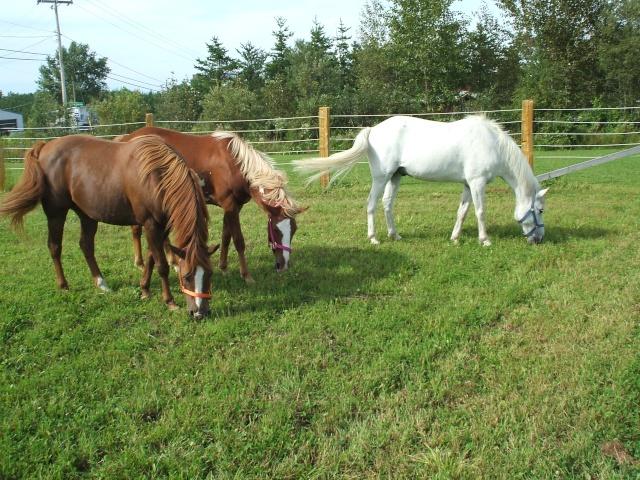 Mes chevaux!! Fin_ao18