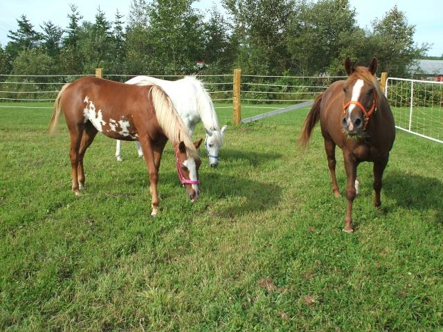 Mes chevaux!! Fin_ao19