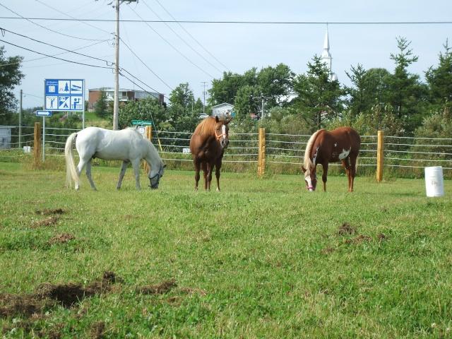 Mes chevaux!! Fin_ao27