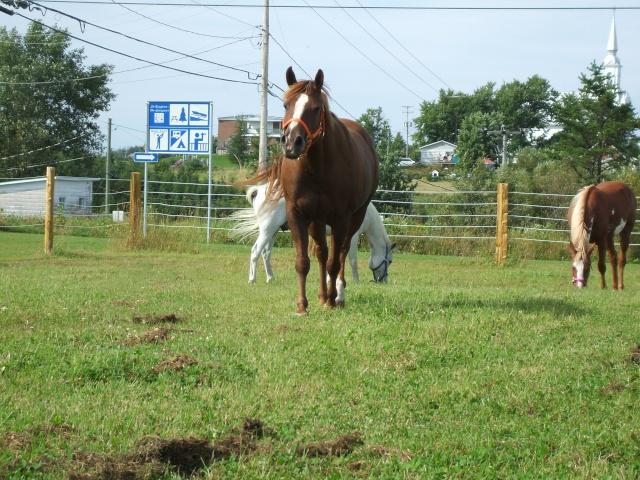 Mes chevaux!! Fin_ao28