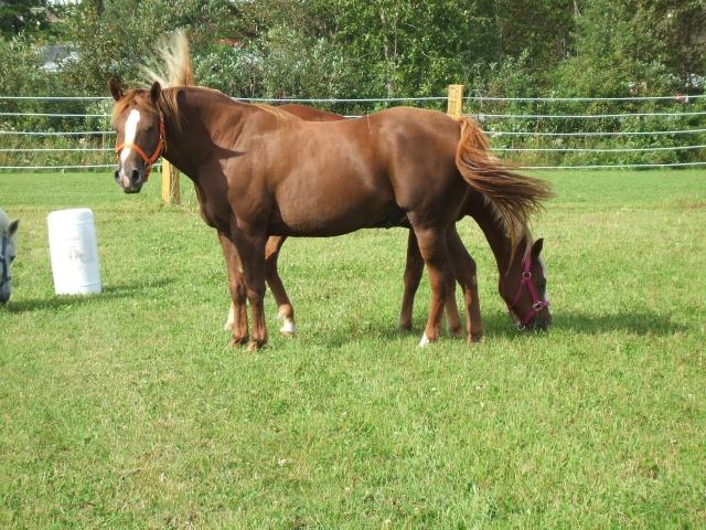 Mes chevaux!! Fin_ao29