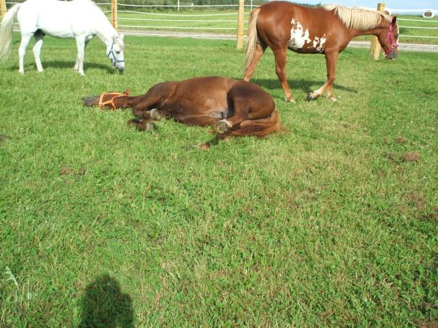 Mes chevaux!! Fin_ao33