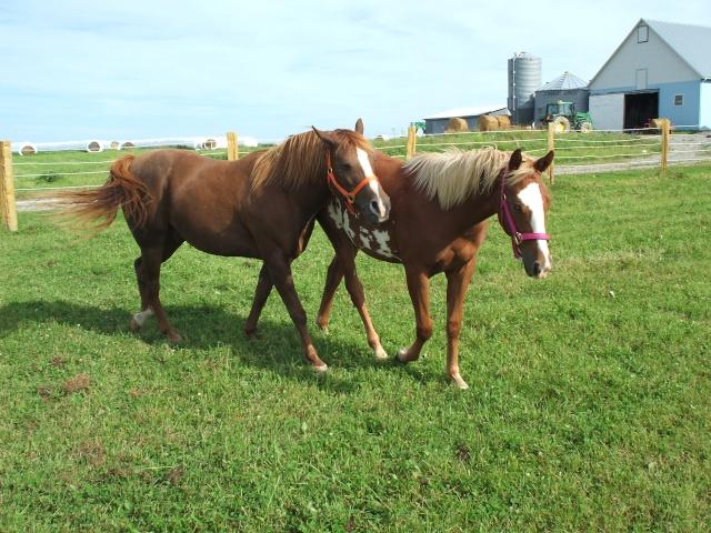 Mes chevaux!! Fin_ao34