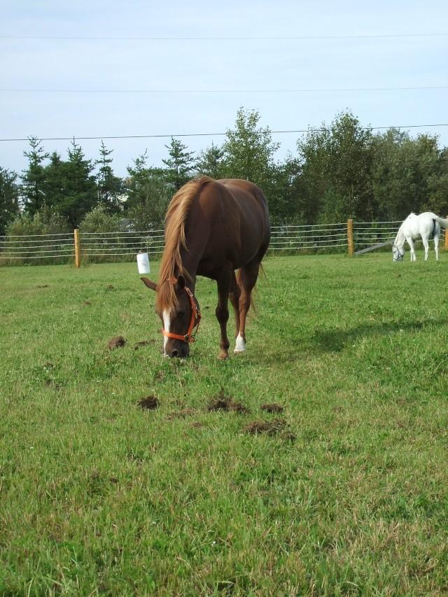 Mes chevaux!! Fin_ao35