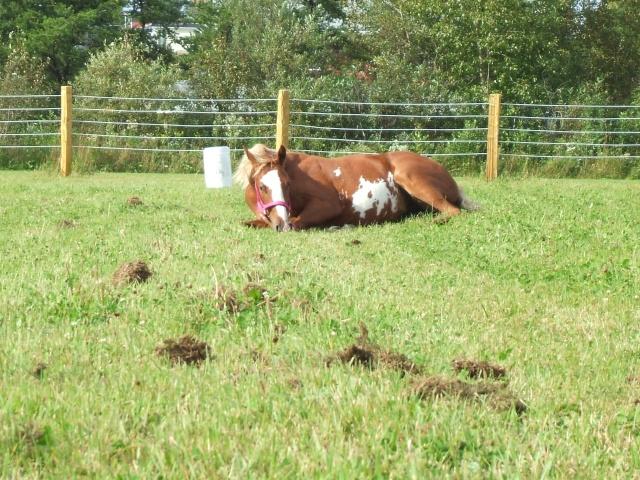 Mes chevaux!! Fin_ao37