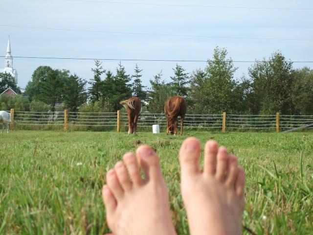 Mes chevaux!! Fin_ao38