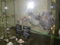 Museum für Urgeschichte(n) de Zug Dscn5025