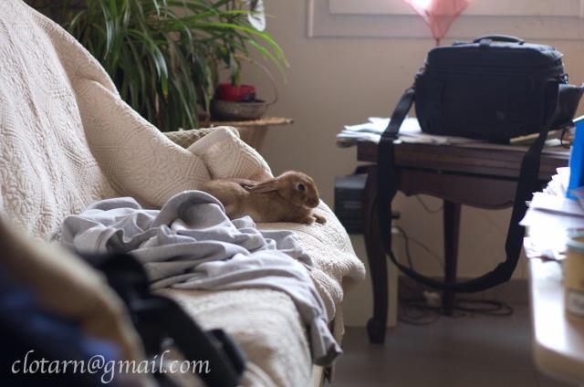 Une hiérarchie de dominance chez le chien? - Page 6 Bourgo10