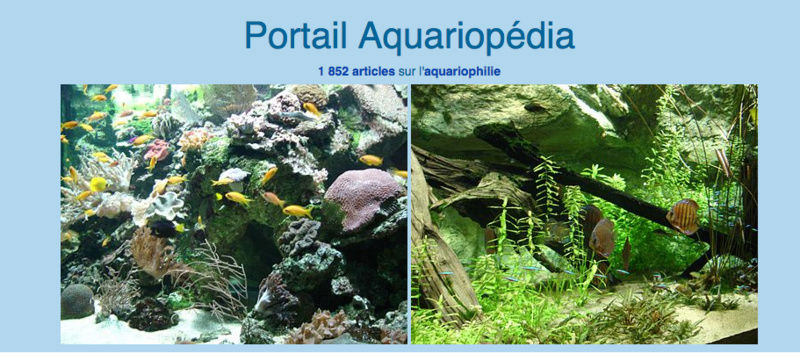 portail Aquariophilie  Captu129