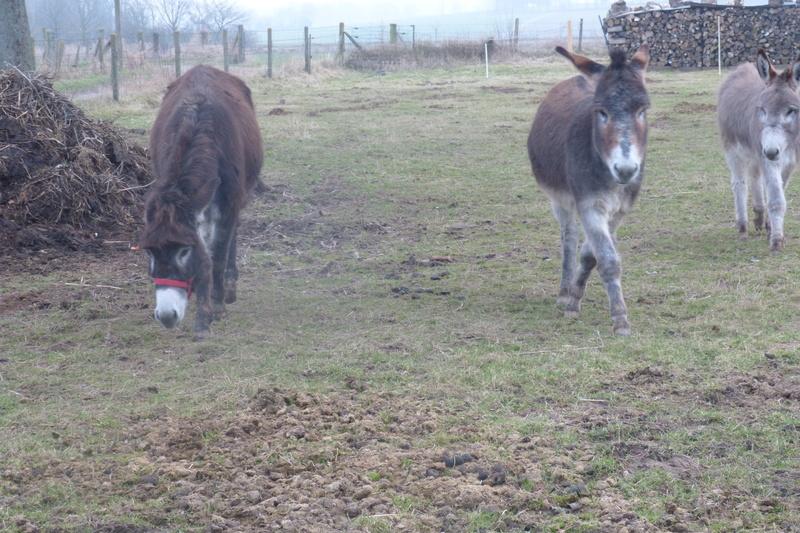 ERNESTINE - ONC âne née en 2011 - adoptée en février 2017 par Cécile P1030711