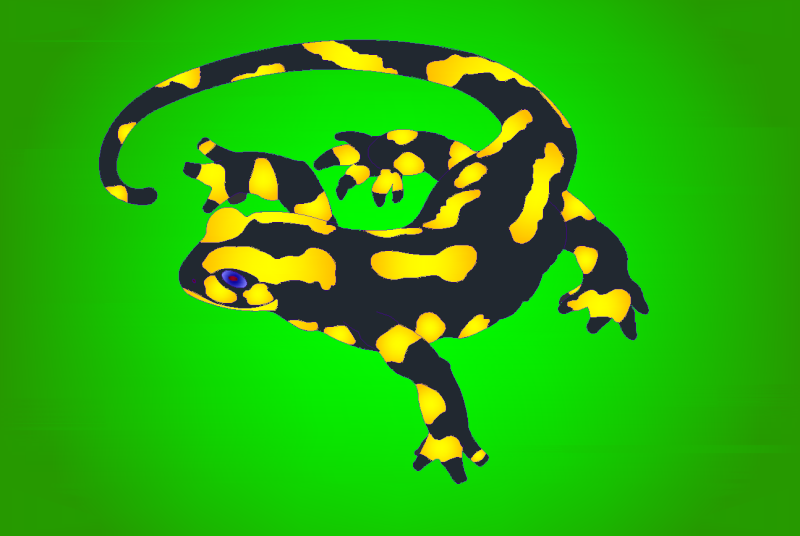 Salamandre sur fond vert _salam10