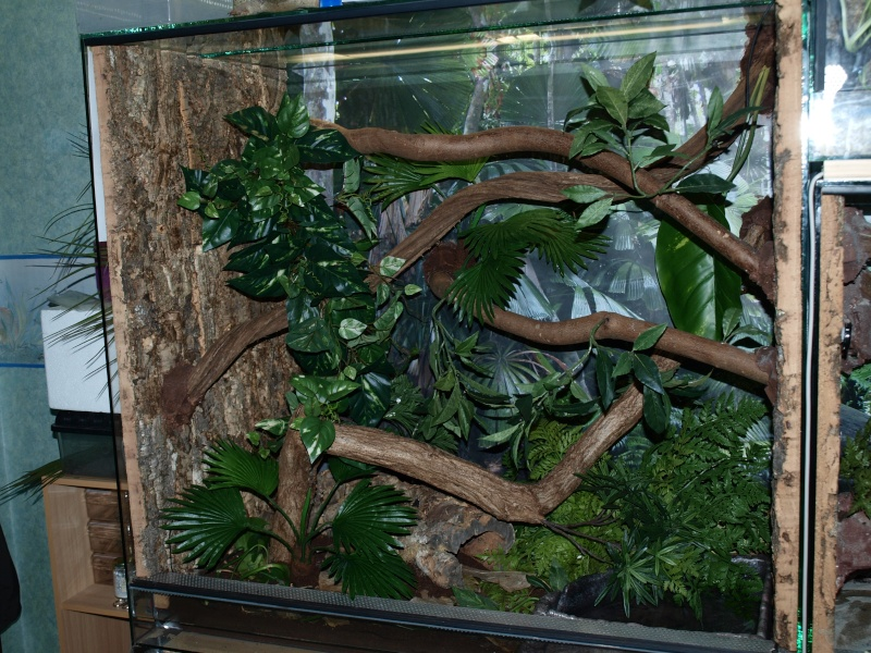 Quelques terrariums ... P7292610