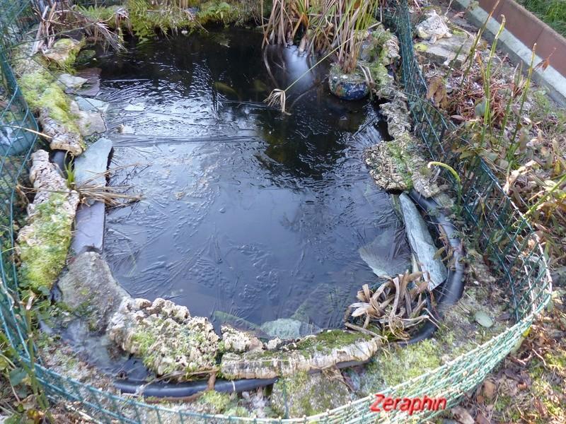 Accouplement dans l'eau glacée - Page 2 P1080012