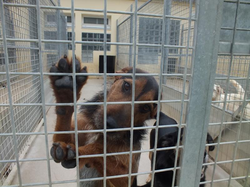SPIROU - jagd terrier 3 ans - Refuge Spa de Thierville (55)... adopté par shouky33 Spirou10