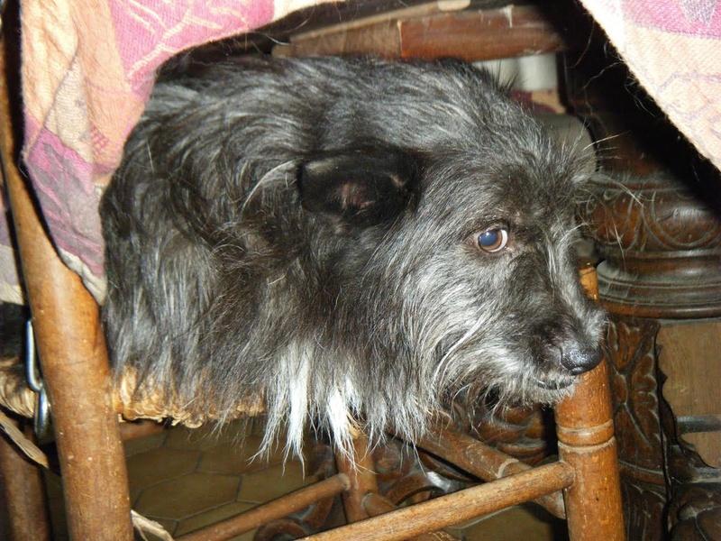 ALDO, mâle croisé terrier, né 01/2006 - Page 3 Aldo110