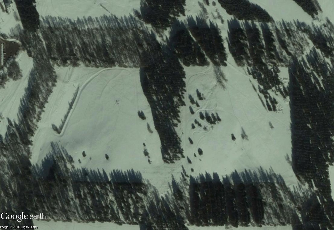 La forêt à damier du col Bayard (Hautes-Alpes) Bayard10