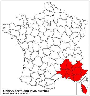 """Ophrys bertolonii bertolonii (""""aurelia"""") Carto_10"""