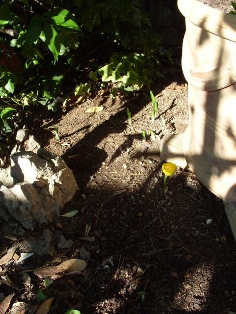 crocus d'automne S1051639