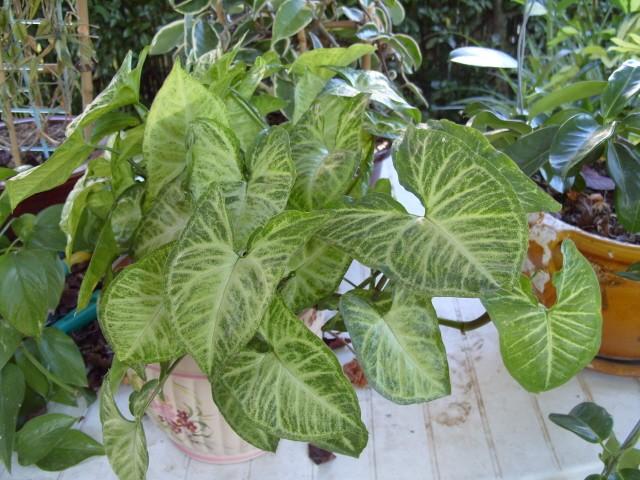 Plantes d'intérieur S1051660
