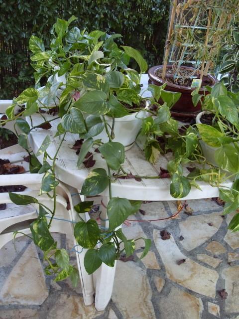 Plantes d'intérieur S1051661