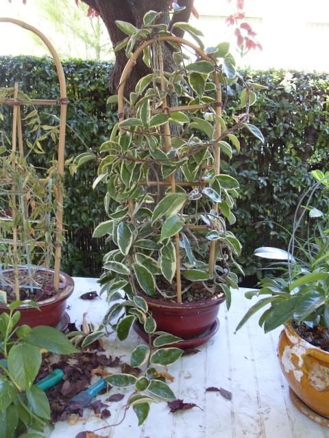 Plantes d'intérieur S1051662