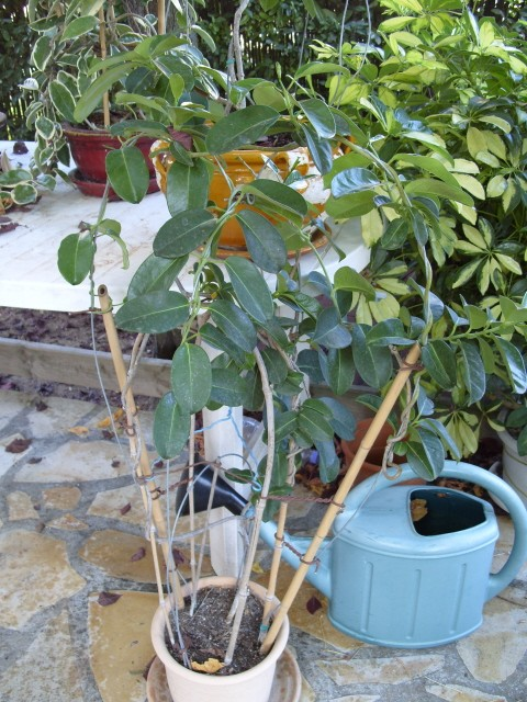 Plantes d'intérieur S1051663