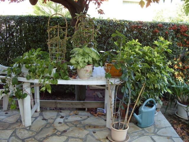 Plantes d'intérieur S1051664