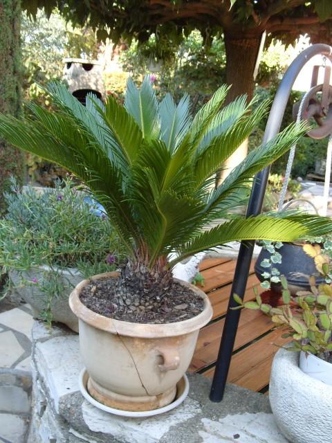 Plantes d'intérieur S1051710