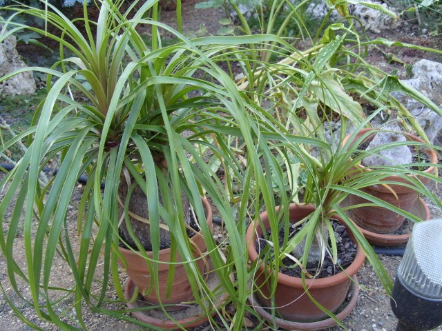 Plantes d'intérieur S1051723