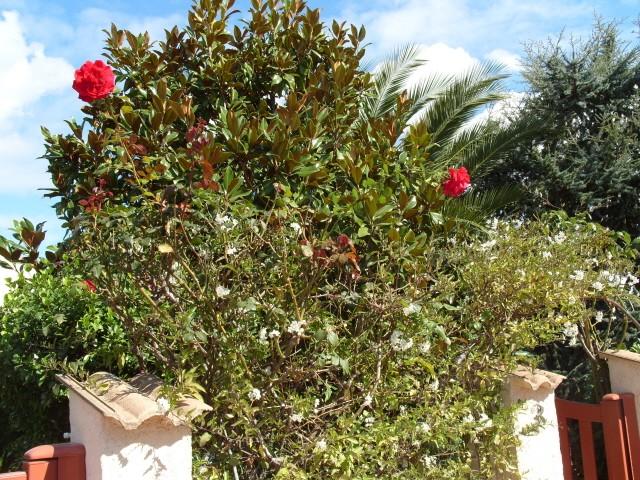 Petit album de roses - Page 2 S1051728