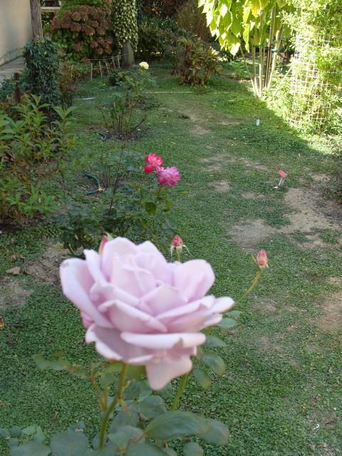 Petit album de roses - Page 2 S1051732