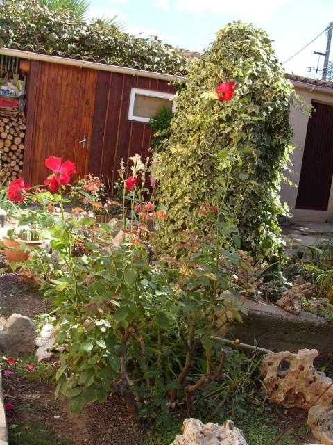 Petit album de roses - Page 2 S1051733