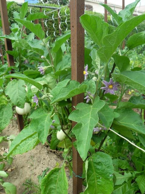 nouvelles plantations de légumes - Page 4 Sdc10218