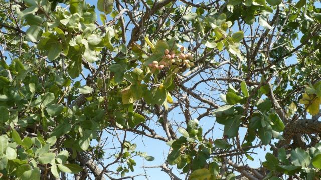 plantes de Sicile P1000912