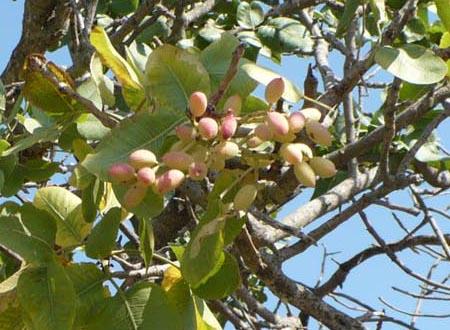 plantes de Sicile P1000914