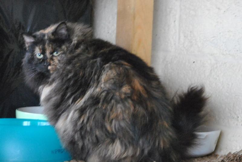 Kitty Cat, née le 1er août 2010 STATUT :CHAT LIBRE - Page 3 Dsc_0010