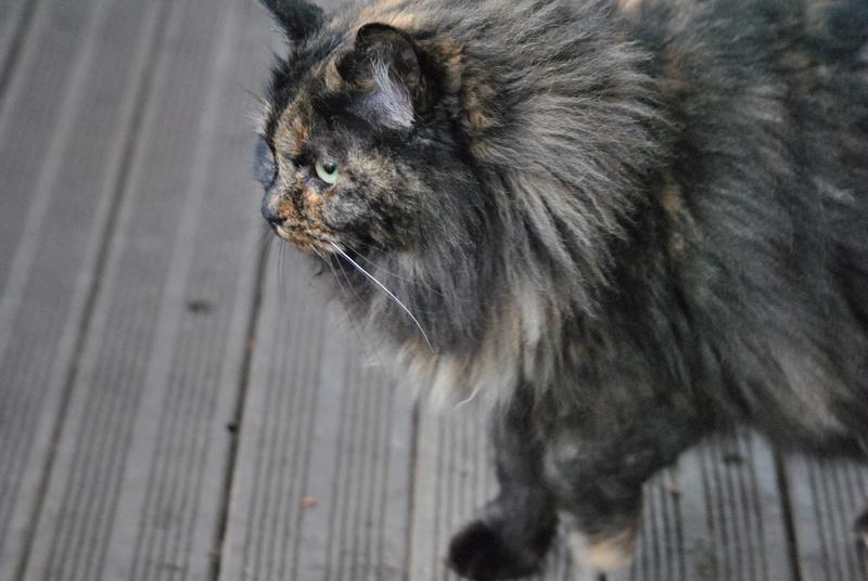 Kitty Cat, née le 1er août 2010 STATUT :CHAT LIBRE - Page 3 Dsc_0011