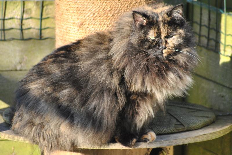 Kitty Cat, née le 1er août 2010 STATUT :CHAT LIBRE - Page 4 Dsc_0017