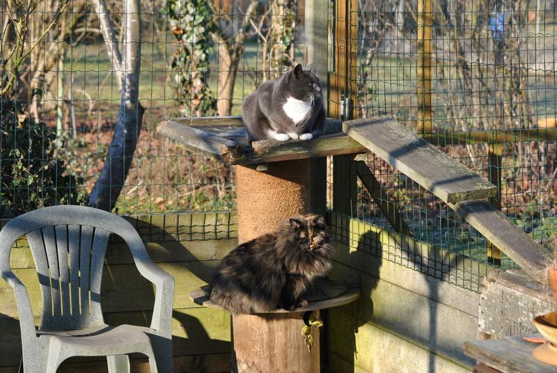 Kitty Cat, née le 1er août 2010 STATUT :CHAT LIBRE - Page 4 Dsc_0019