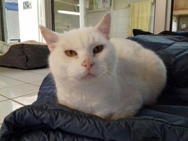 MIMI (Blanc) Mimi210