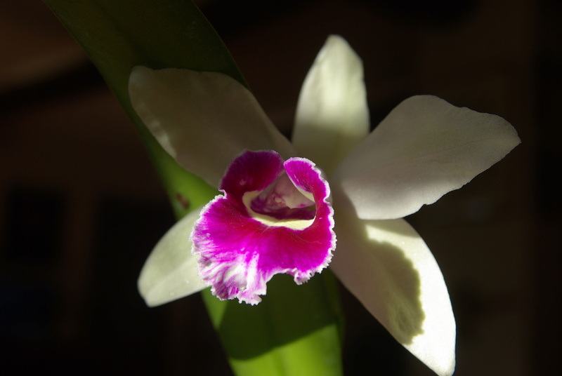 floraisons des orchidées - Page 41 Imgp7520