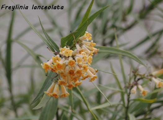 deux ou trois fleurs dans le vent Dscn6412